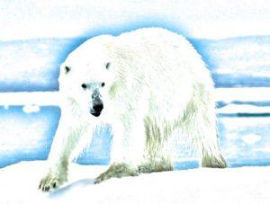 Audun-the-Bear