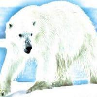 Audun and the Bear Story
