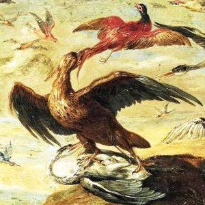 The Man, Hawk, Dove Story