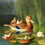 The Twelve Wild Ducks Story