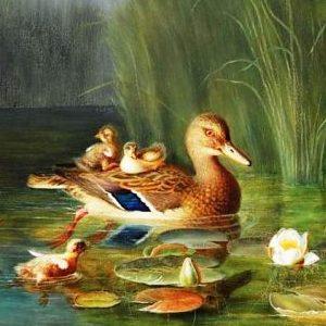 Twelve Wild Ducks Story