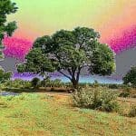 Birbal Mango Tree