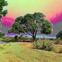Akbar Birbal Stories ~ Birbal and the Mango Tree
