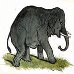 The Mice and the Elephant Panchatantra Stories
