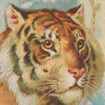 The Tiger's Whisker